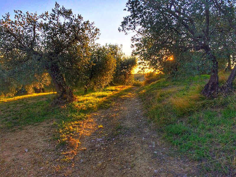 Mtb Perugia Sentieri Umbria